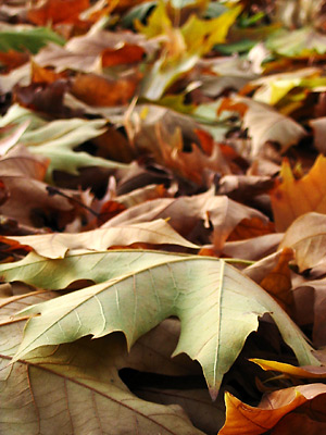 feuilles mortes multicolores