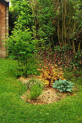 massif : amelanchier, hosta, heuch�re, carex, hakenochloa